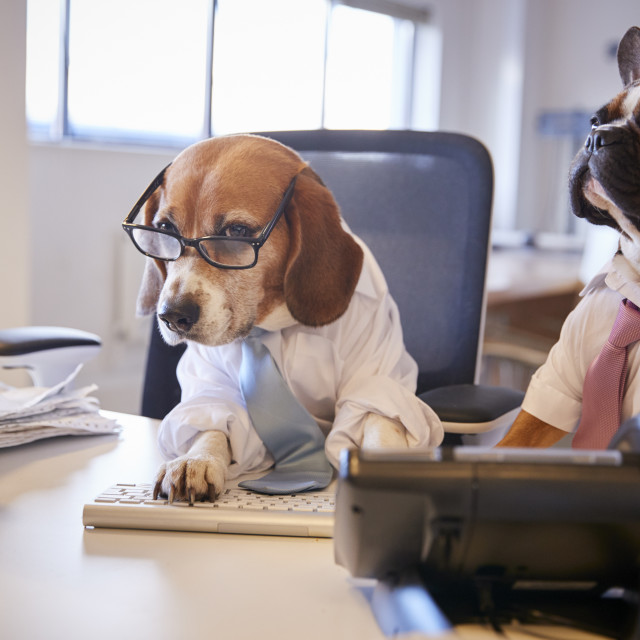 """Bulldog And Beagle Dressed As Businessmen At Desk With Computer"" stock image"