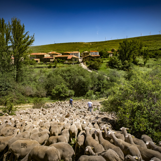 """Transhumance in Spain"" stock image"