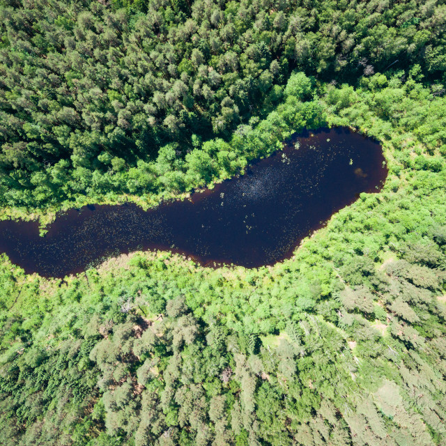 """""""Bird's eye view of a small lake in the midst of forests"""" stock image"""