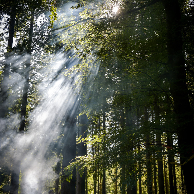 """Smoke in the forest"" stock image"