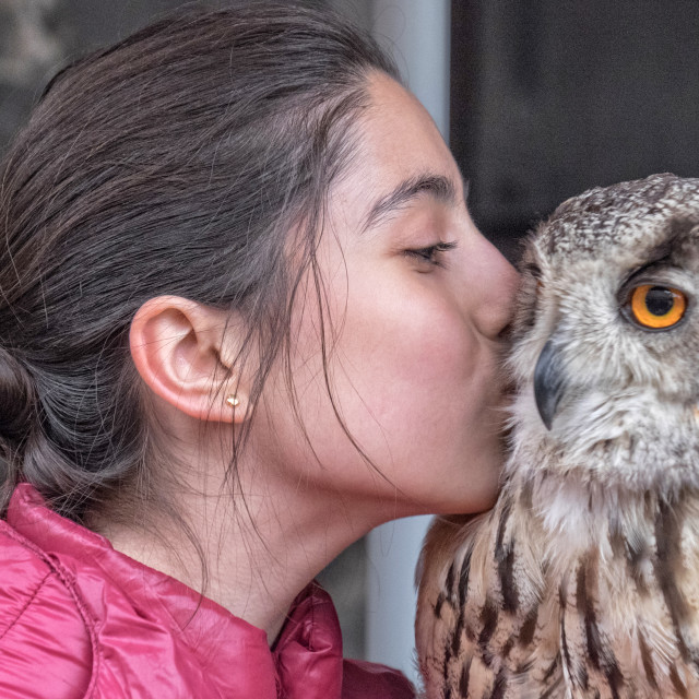 """Girl kisses owl"" stock image"