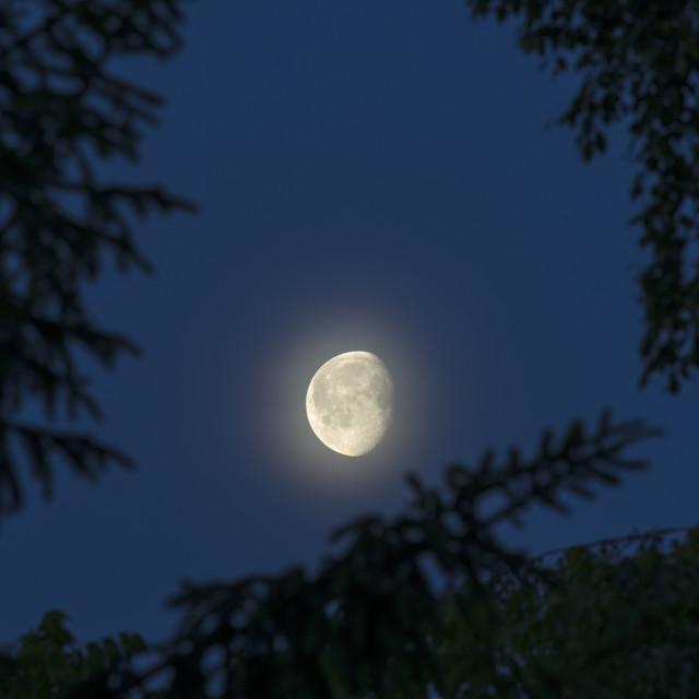"""""""Moonrise"""" stock image"""