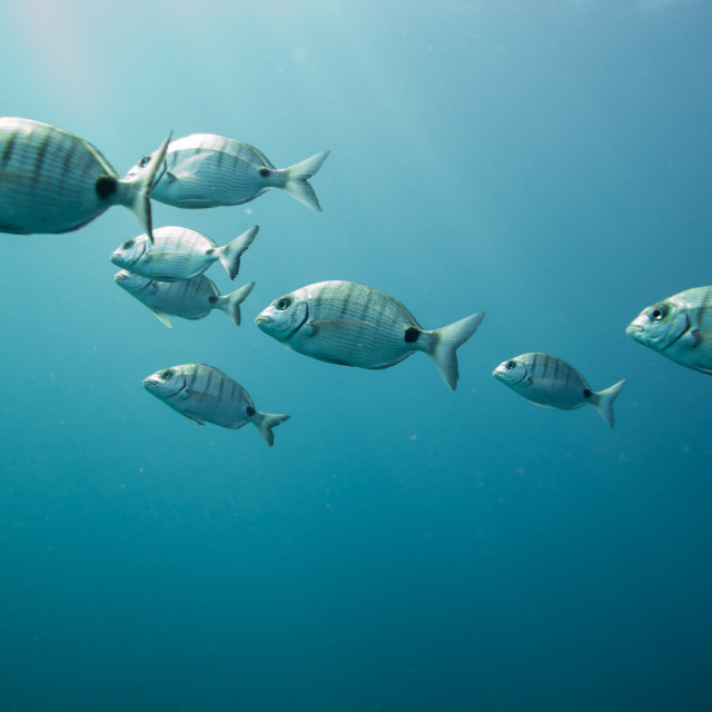 """group of fishes swimming"" stock image"
