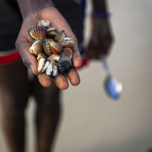 """Detail of the hand of a cockles harvester in the beach in the island of Orango, Guinea Bissau, at sunset."" stock image"