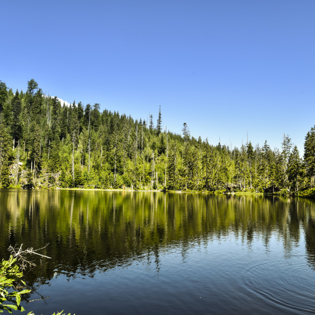 """""""Prasily Lake, natural lake in the Czech Republic is located in the Sumava mountains"""" stock image"""