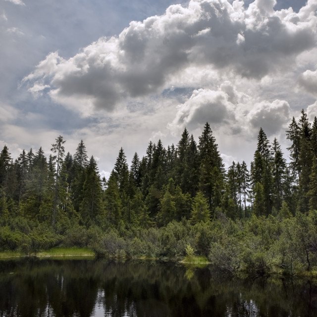 """swamp and lake witk sky in Sumava"" stock image"