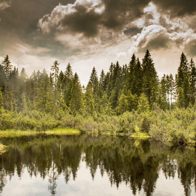 """swamp and lake witk sky in Sumava"" stock image"