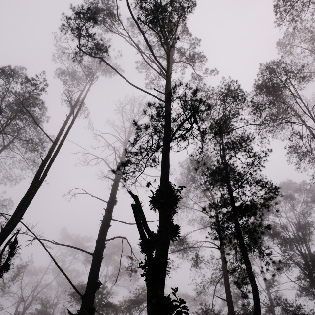 """""""a foggy forest in one afternoon in Berastagi, North Sumatera Indonesia"""" stock image"""
