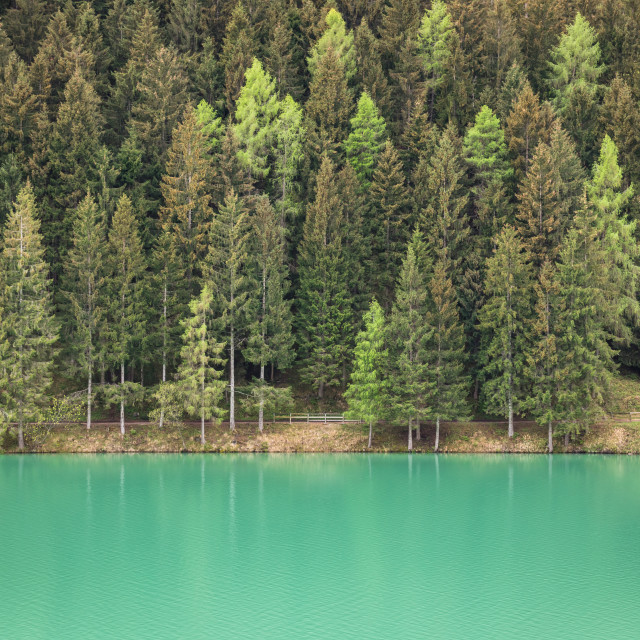 """Forest by the lake"" stock image"