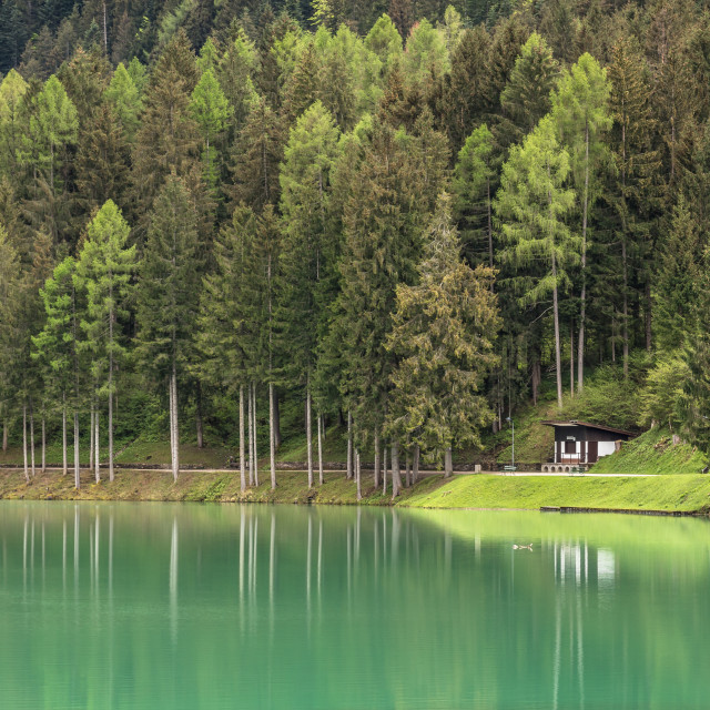 """""""Forest by the lake"""" stock image"""
