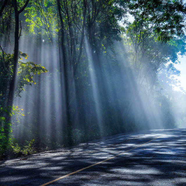 """""""Sunny Road in the Forest"""" stock image"""