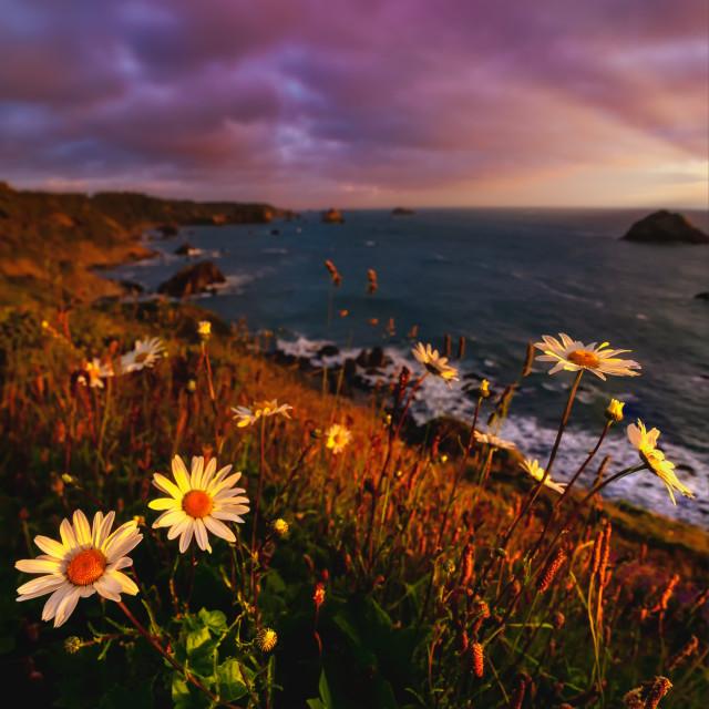 """California Sunset with Wildflowers"" stock image"