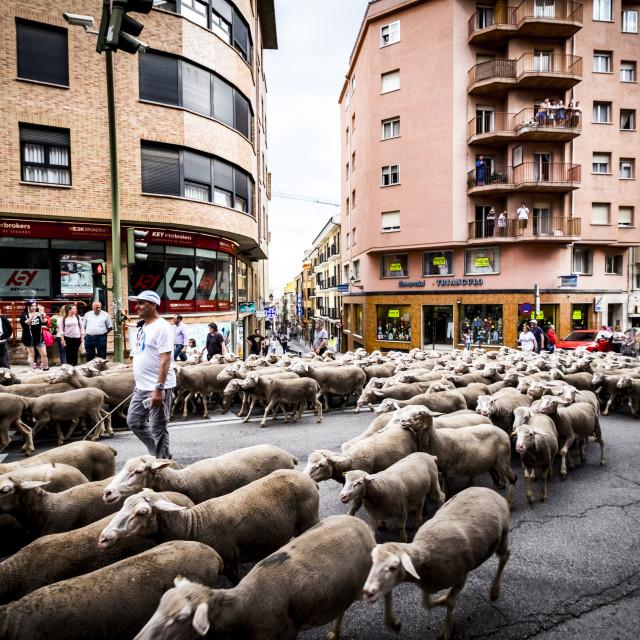 """Transhumance in Spain"" stock image"