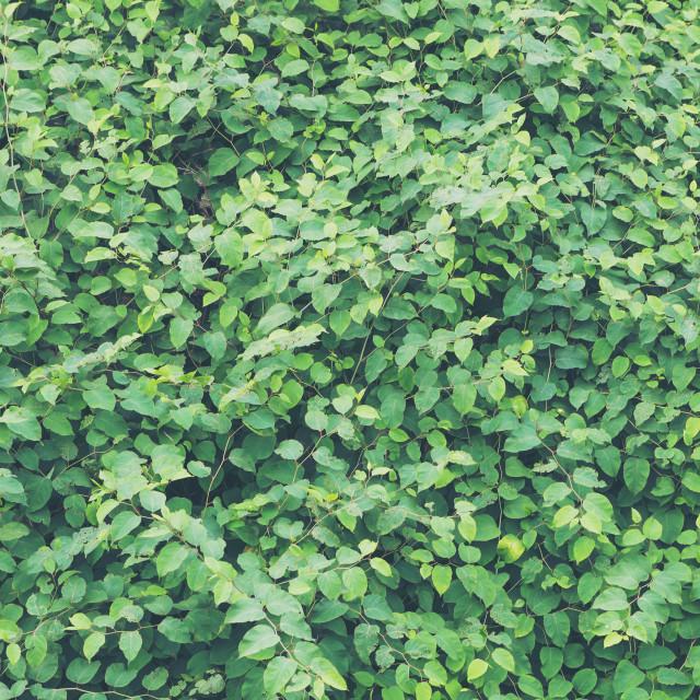 """Lush foliage dim green background"" stock image"