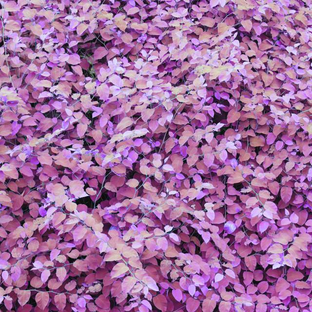 """""""Lush foliage ultraviolet background"""" stock image"""