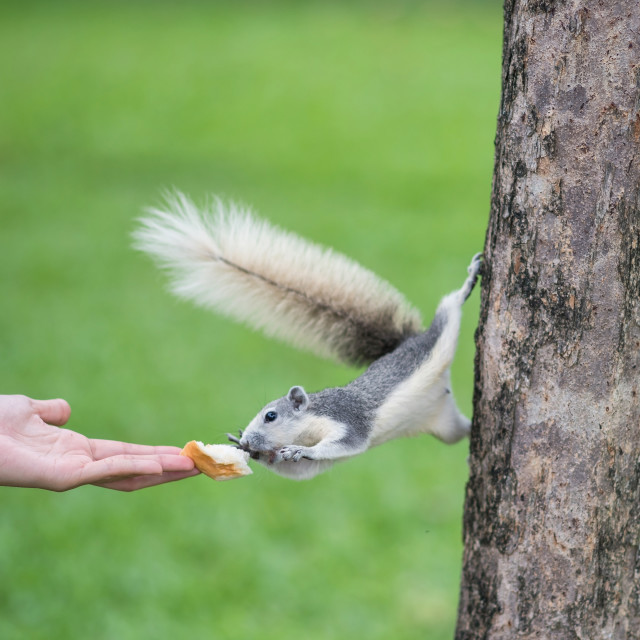"""""""feed bread food to squirrel"""" stock image"""