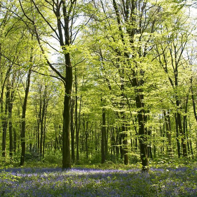 """""""Deep in Micheldever Wood"""" stock image"""
