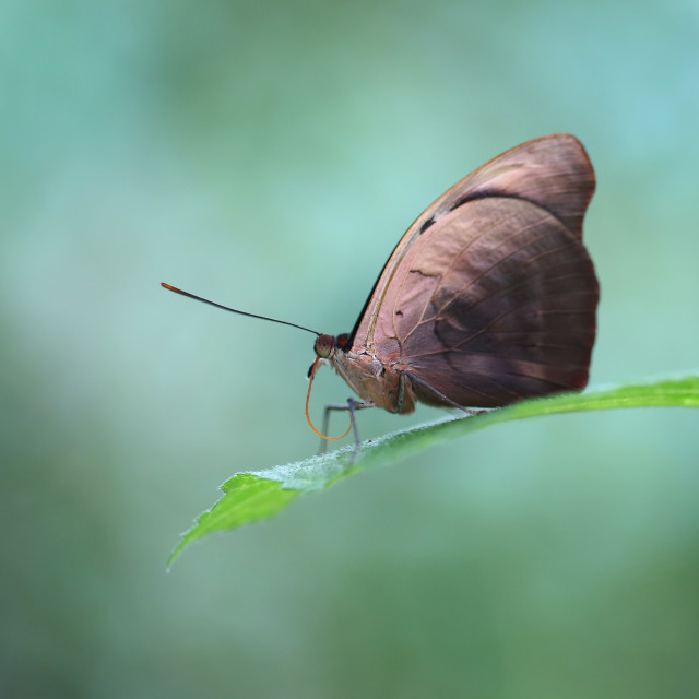 """Butterfly Isolated"" stock image"