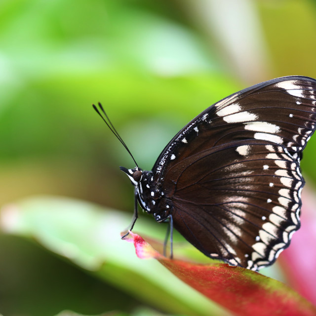 """""""Isolated Butterfly on A Leaf"""" stock image"""