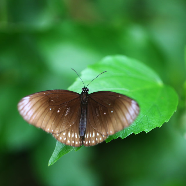 """Butterfly Sitting on a Leaf"" stock image"