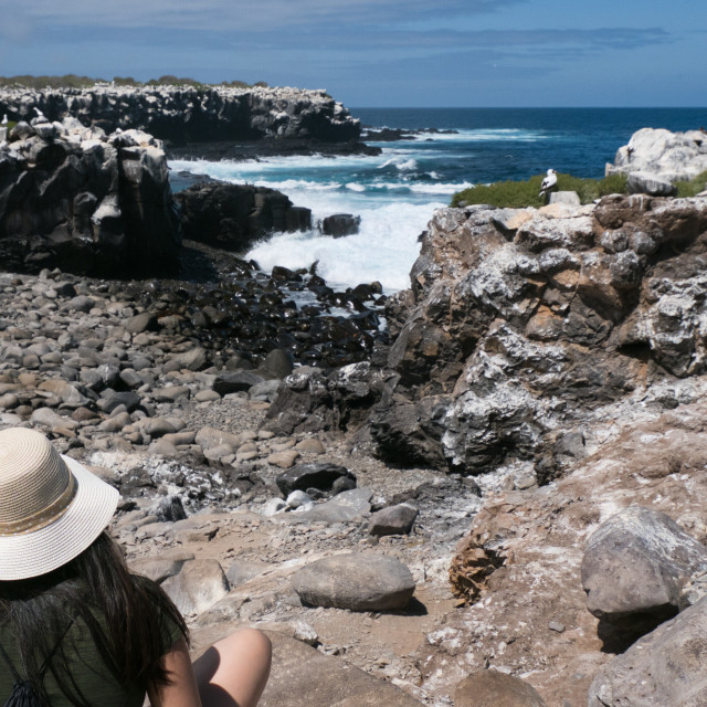 """A Galapagos visitor enjoys the view"" stock image"