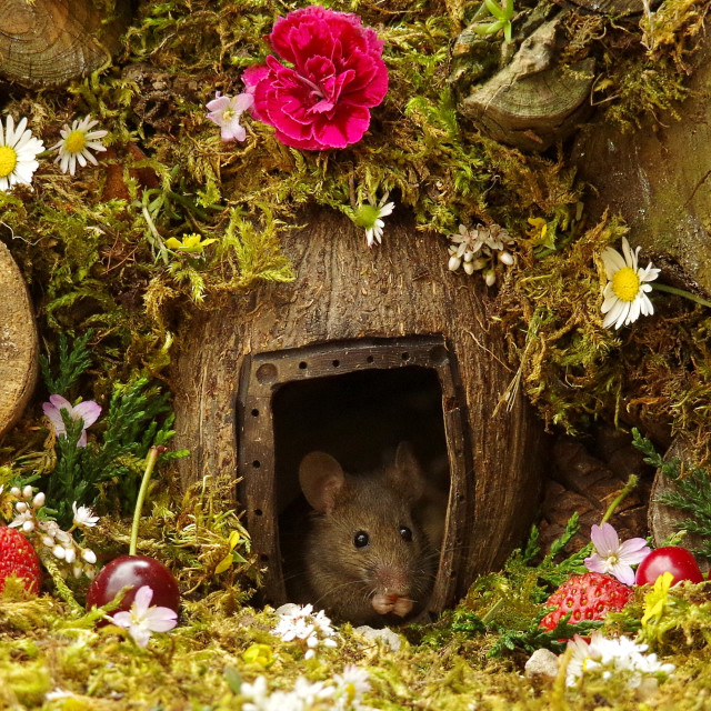 """mouse in a log pile house"" stock image"