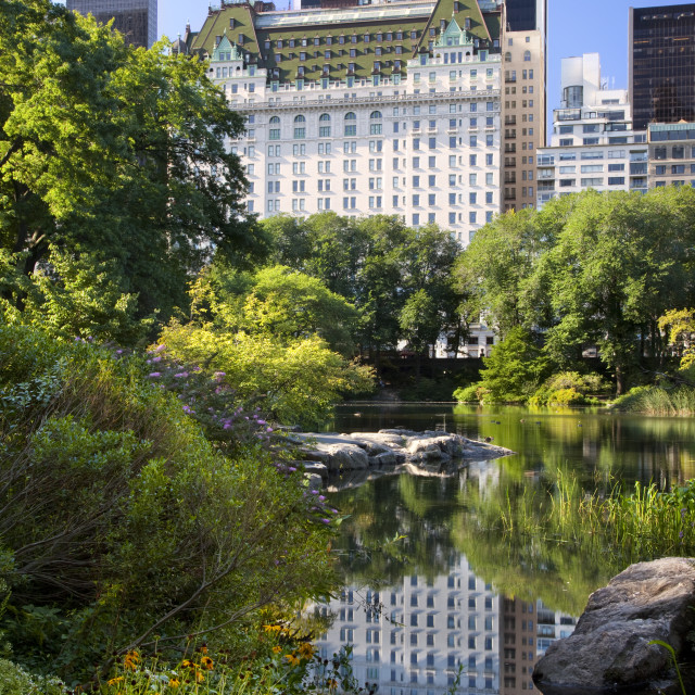 """Pond in Central Park with reflections of the Plaza Hotel and buildings of..."" stock image"