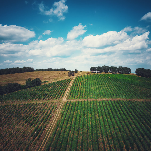 """""""Aerial view over vineyard in Europe"""" stock image"""