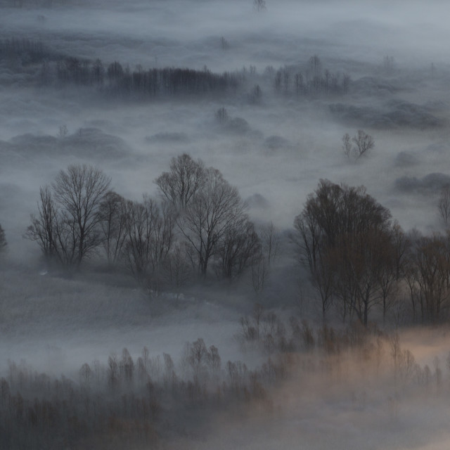 """""""Trees in the morning mist"""" stock image"""