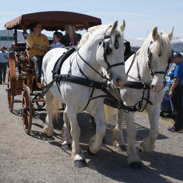 """Horses and carriage"" stock image"