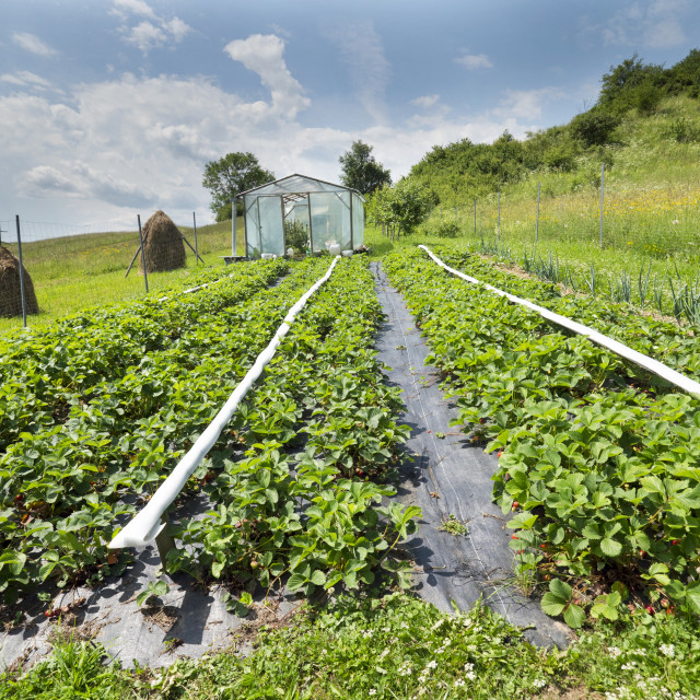 """""""Growing vegetable plots in the foothill area"""" stock image"""