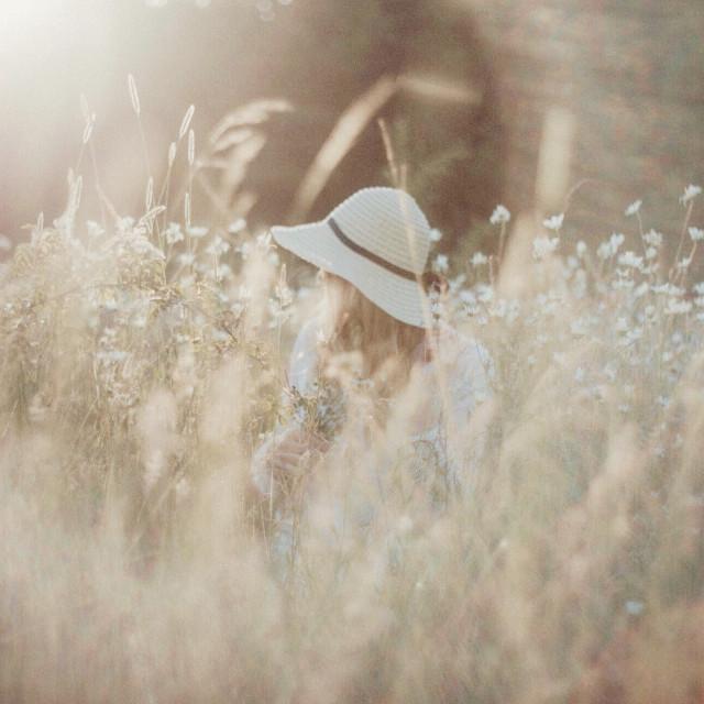 """Sunlit daisy meadow"" stock image"
