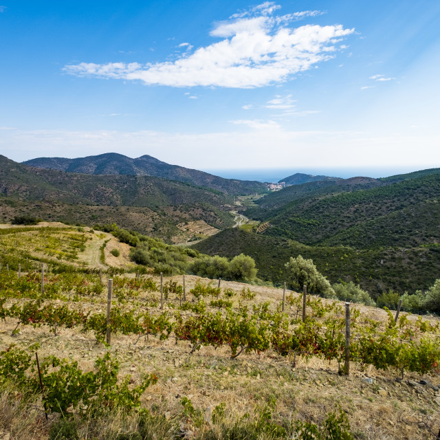 """Vineyards for the production of organic wines around the town of Colera north of the Costa Brava in the province of Gerona in Catalonia Spain"" stock image"