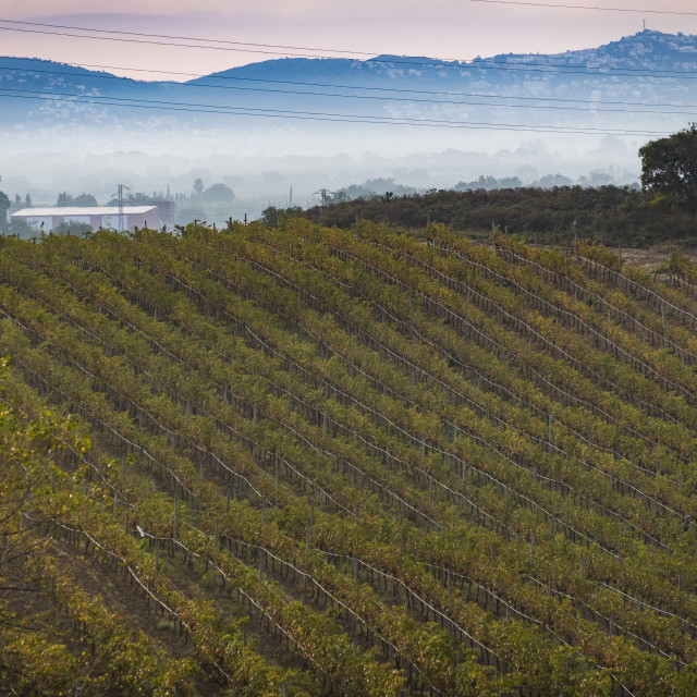 """Vineyards producing organic wines in the Emporda region north of the Costa Brava in Catalonia Spain"" stock image"