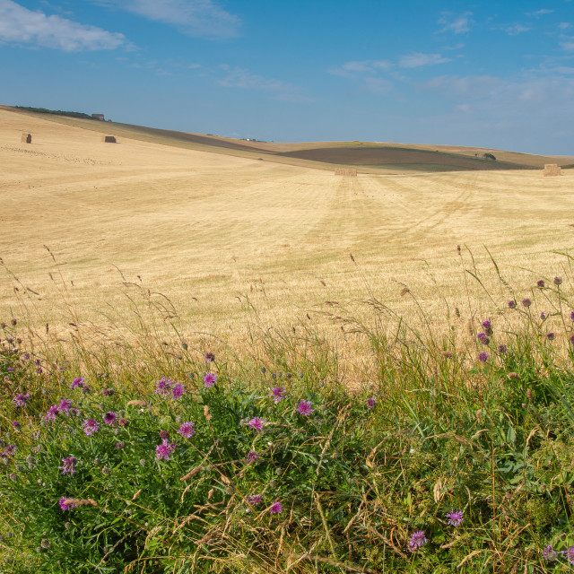 """Sussex countryside near East Dean"" stock image"