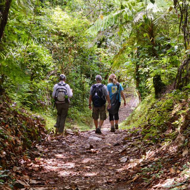 """Walking a jungle trail"" stock image"