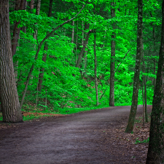 """Path Through the Forest"" stock image"