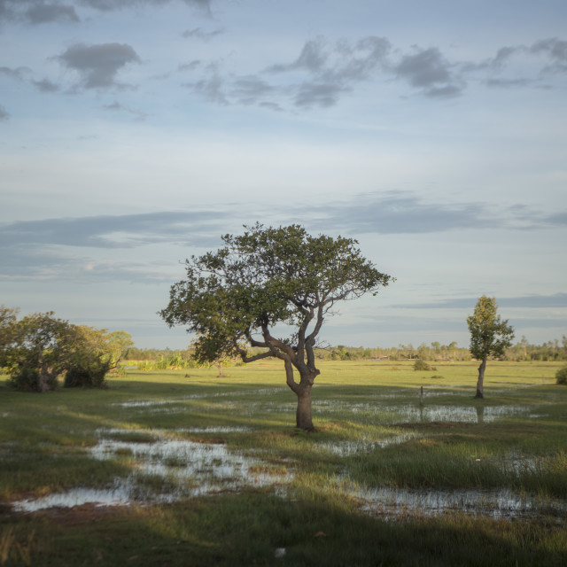"""CAMBODIA KAMPONG THOM LANDSCAPE FIELD"" stock image"