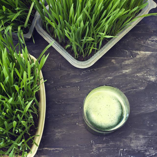 """Green wheat grass juice.Detox"" stock image"