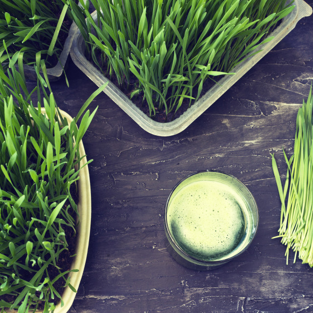 """""""Juice from wheat grass"""" stock image"""