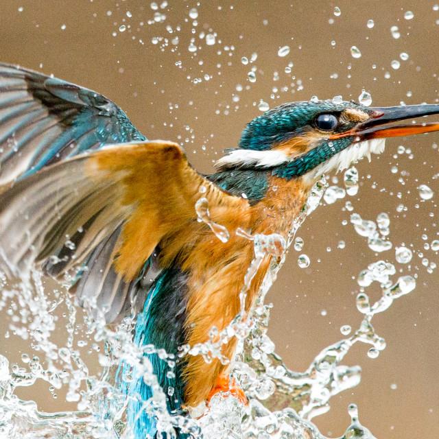 """""""Kingfisher eruption"""" stock image"""