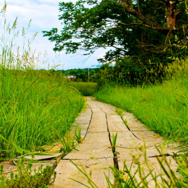 """wooden path"" stock image"