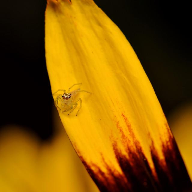 """Little spider"" stock image"