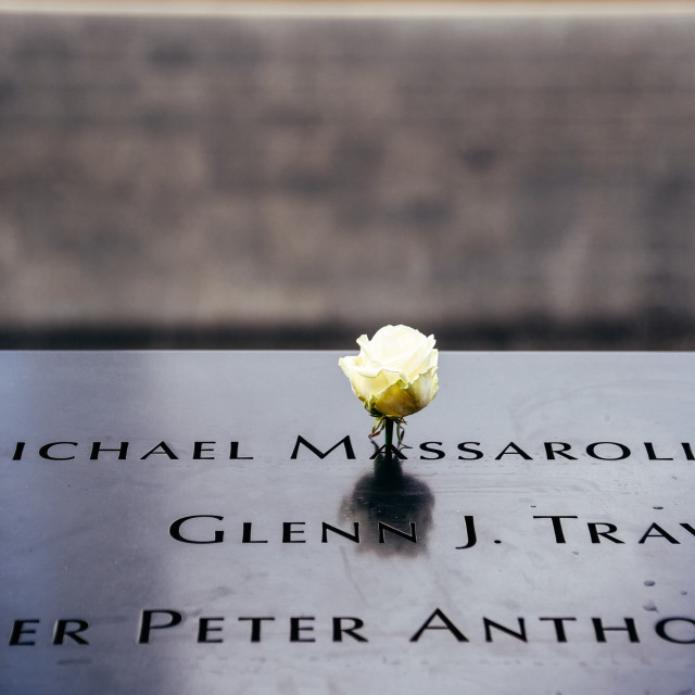 """Flower in National September 11 Memorial in New York City"" stock image"