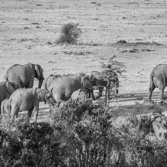 """Elephant moving across the Mara"" stock image"