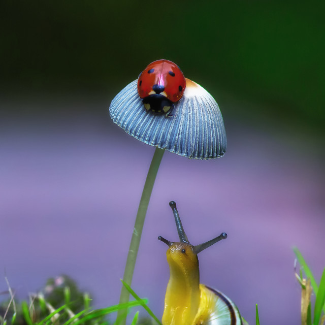 """""""The Ladybird and the Snail"""" stock image"""
