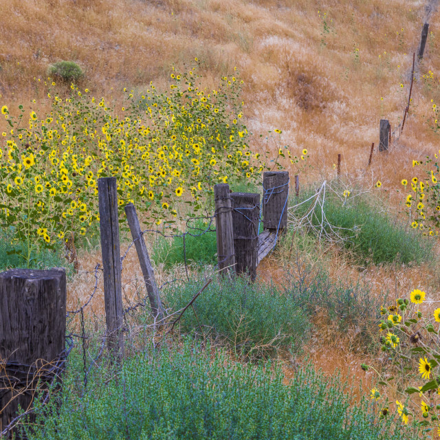 """Fence Line"" stock image"