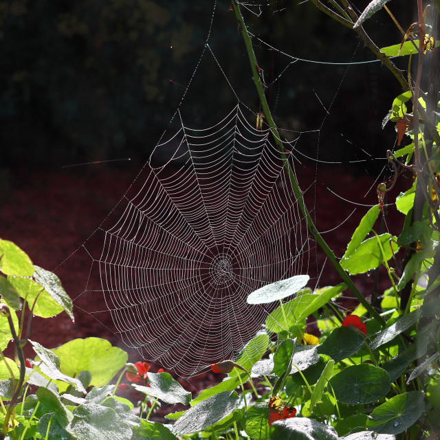 """Cobweb and Frost"" stock image"