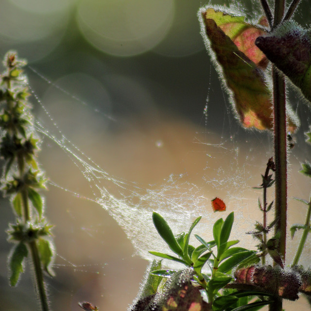 """Webs and colourful leaves and bokeh in frost U.K."" stock image"