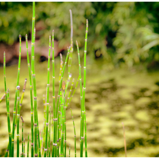 """""""Garden Views"""" stock image"""